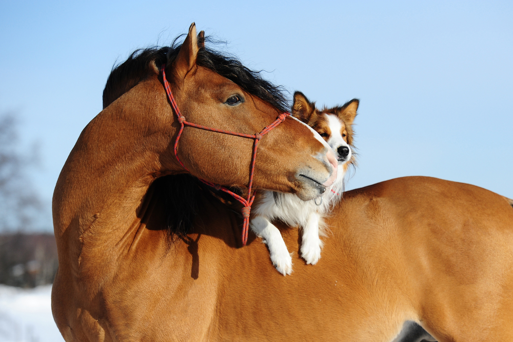 What is Horse Therapy?
